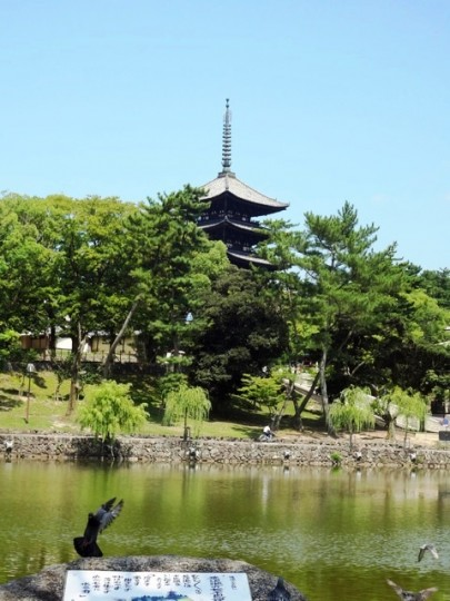 My Dear(deer) city NARA! Japan's first capita from 710 to 784, you can find old temples and historical spots everywhere. 「奈良」