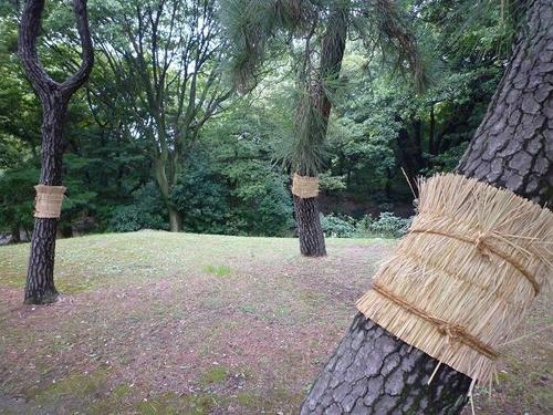 'Komo-maki' is Japan's traditional method to exterminate eggars, insect pests of pine trees, which has long been carried out since the 17th century.