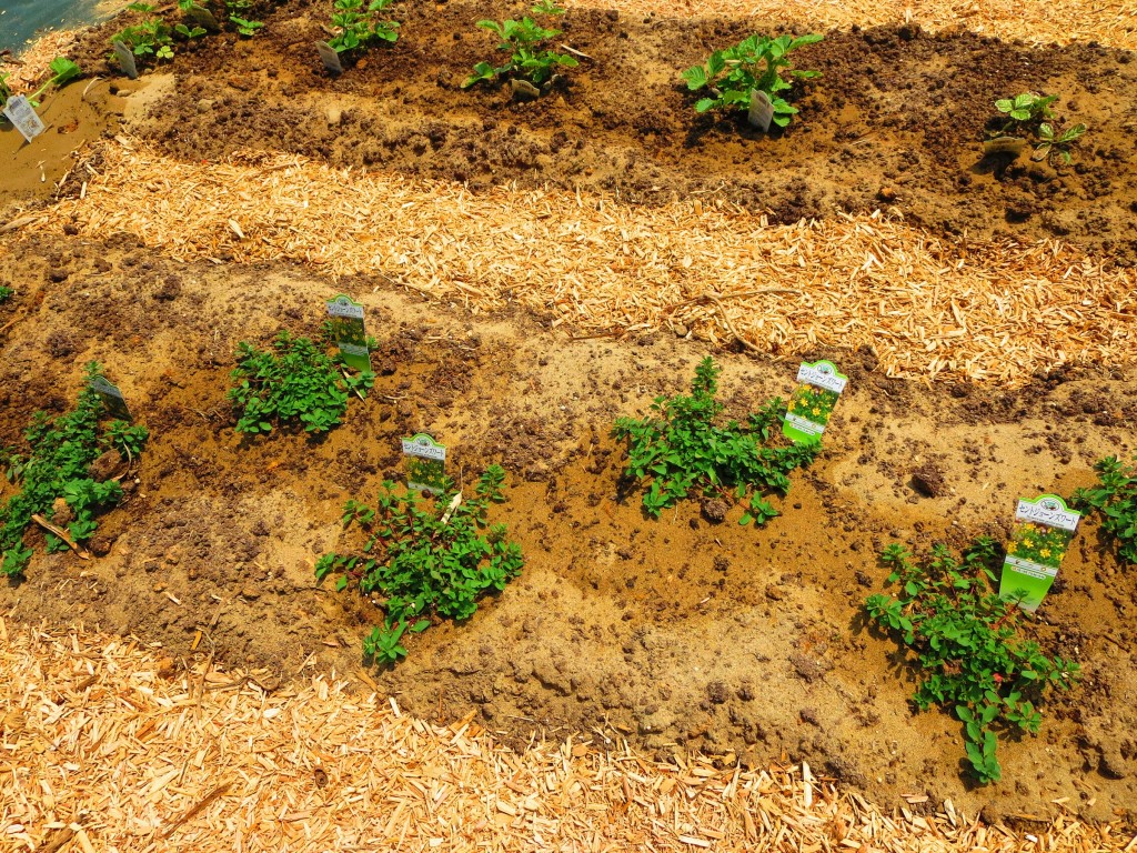 how to take care of an herb garden