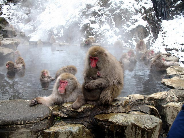 Visit the Famous Snow Monkeys in Jigokudani Monkey Park