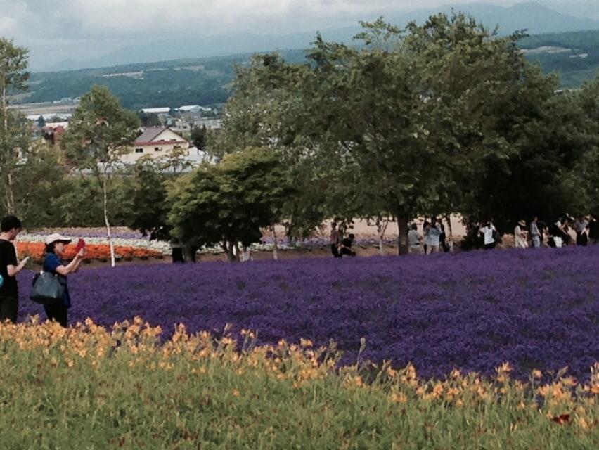 lavender 3-5