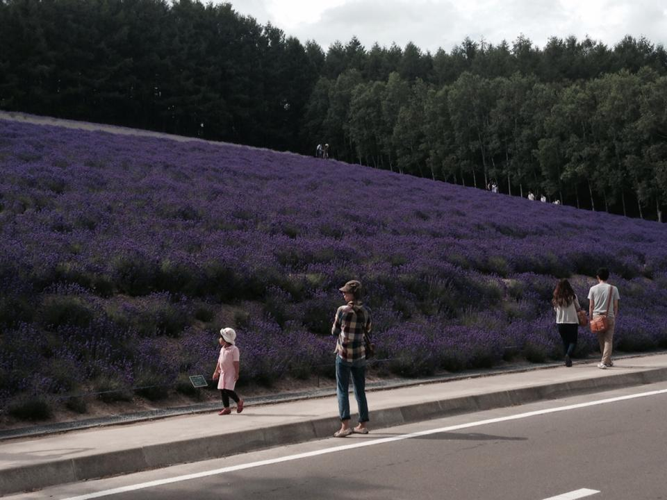 lavender3-6