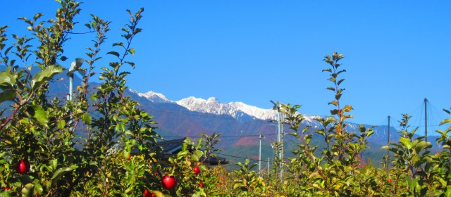 Apple Season in Nagano