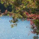 hokkaido autumn tour 15 339a