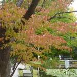 hokkaido autumn tour 15 766