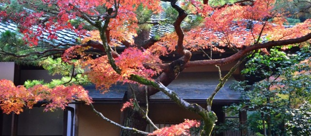 The Spirit of Zen and Tea Culture at Kotoin Temple, Kyoto