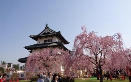 Escorted Tour from Honolulu – Tohoku Sakura Tour